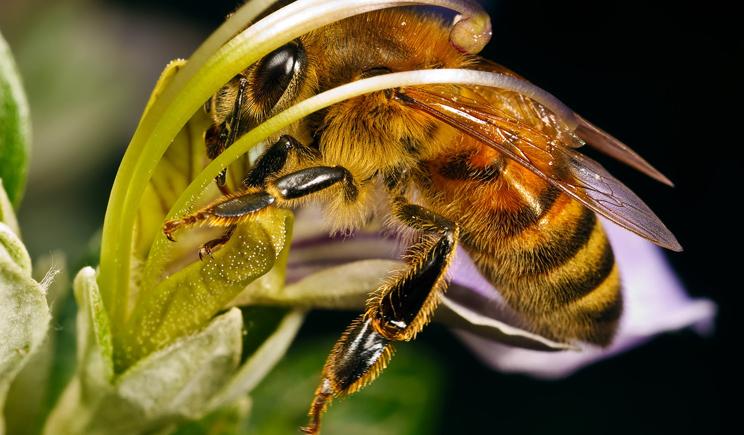 """Пчелы породы """"Бандера"""" или встреча террористов с природой"""