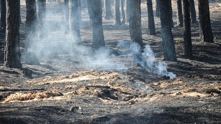 В Херсонской области горело 150 га леса
