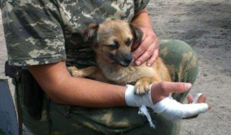 Пограничники рассказали про свою собаку, которая трижды спасала им жизнь