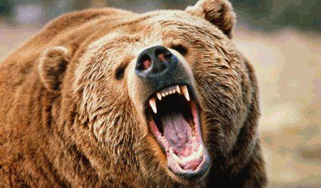 В РФ Медведь разорвал мужчину на глазах у женщины, когда пара выгуливала собаку