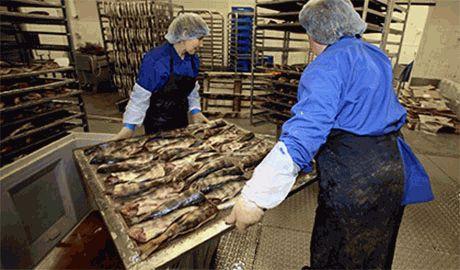 Санкции в действии. Мурманский рыбокомбинат прекратил работу из-за отсутствия сырья из Норвегии!