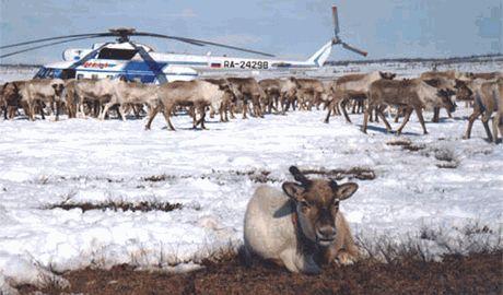 Беженцев с Донбасса отправляют обживать северные регионы Сибири