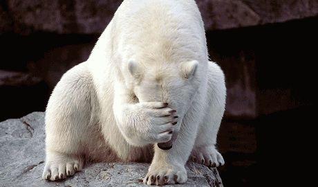 Россия хочет заполучить 1,2 миллиона квадратных километров Арктики в свою собственность