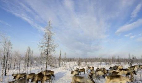 """Для улучшения безопасности в Арктике РФ создает командование """"Север"""""""