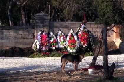 Могилу сына Януковича охраняет пес на привязи