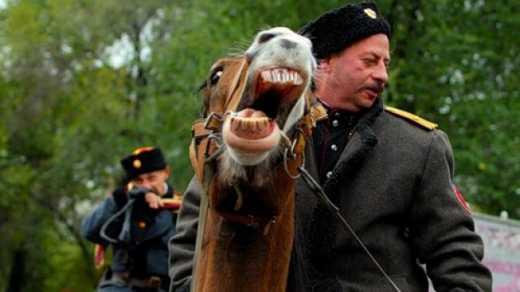 Вместо «Ночных волков» в Берлин едут Донские казаки, при чем на лошадях