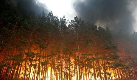 """Российскому ТВ плевать на пожар в пол Сибири, оно продолжает обсуждать """"хунту"""" ФОТОфакт"""