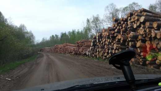 Китайцы «отжали» у русских Сибирь и вырубывают там лес ВИДЕО