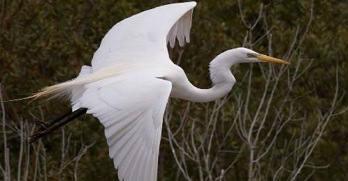 «Цапли Карл!!!»: после аннексии Крыма цапли и другие птицы сбежали на континентальную Украину