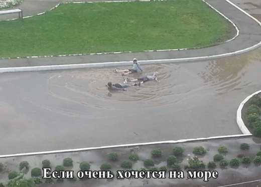 ДТП, алкоголь и ядовитые продукты: В РФ назвали причины по которым необходимо запретить отдых за рубежом