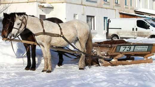 21 век: на РФ автобусы хотят заменить на.. гужевые повозки