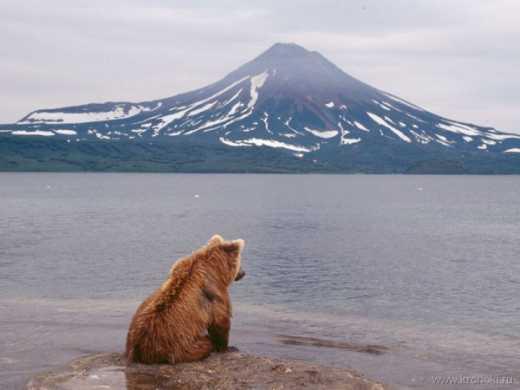 Рассуждения по поводу недавнего издевательства над медведем на Курилах