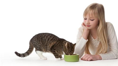 Какими кашами можно кормить кошек