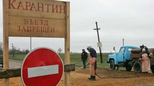 Возле Одессы зафиксировали вирус африканской чумы