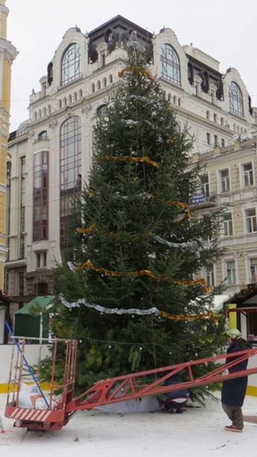 В Киеве установили первую ёлку