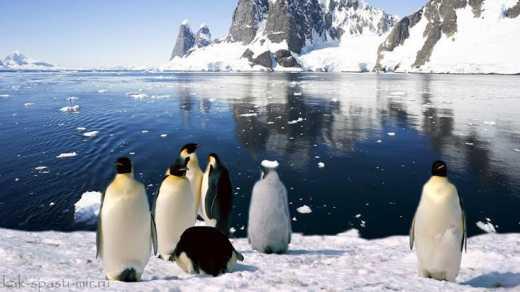 NASA: Российские ученые ошиблись, так как лед в Антарктиде не тает