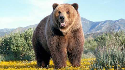 В России на двух детей напал медведь