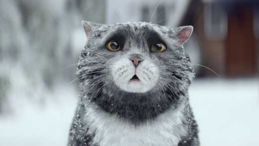 Видео про Рождественского кота «порвало» Интернет
