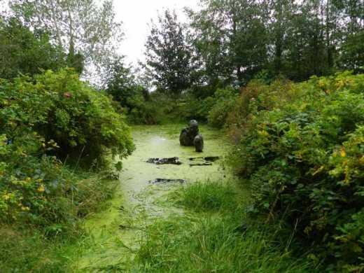 Страшна скульптура шокувала відвідувачів ірландського парку