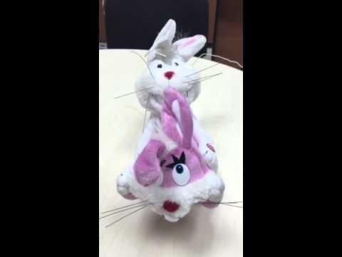 Секс-кролики для сирот: благотворители лохонулись на всю Российскую Федерацию (ВИДЕО)