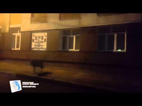 В Курске РФ по улице разгулялся волк (ВИДЕО)