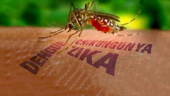 У Європі зафіксували перший спалах вірусу Зіка