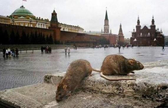 Конституционный суд РФ официально признал стукачество, а россиян быдлом