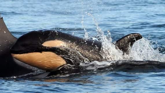 Пассажирский корабль врезался в кита, есть жертвы