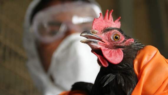 У Криму — спалах пташиного грипу