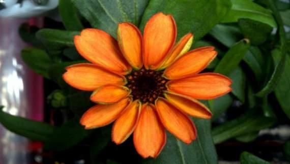 В космосе впервые распустился цветок (ФОТО)