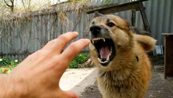 На Закарпатті пес заразив сказом 6 людей