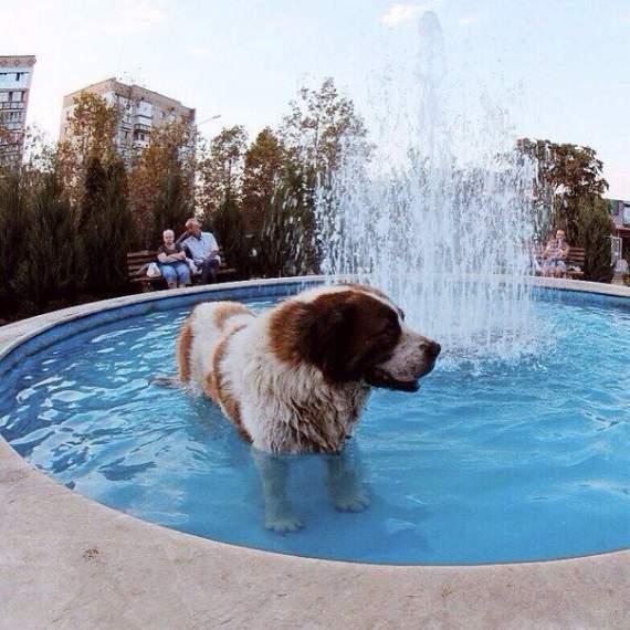 Український Хатіко: пес чекав свого господаря біля поліклініки 10 років