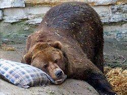 Обзор зверств русских над своим тотемом – медведем