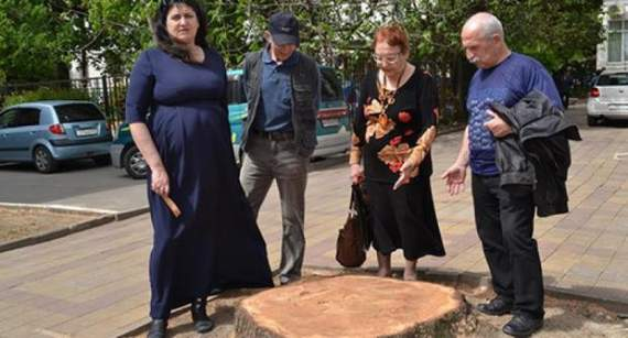 В Сочи в День космонавтики спилили дерево Гагарина