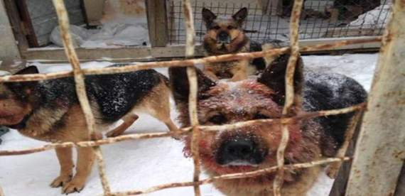Под Борисполем собаки загрызли участника АТО: стали известны ужасные детали