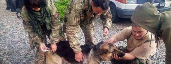Собака прикрив собою двох українських бійців АТО під час обстрілу (фото)