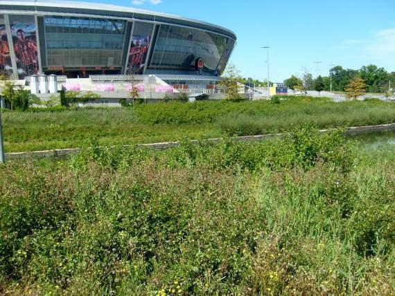 Донбасс-Арена заросла сорняком