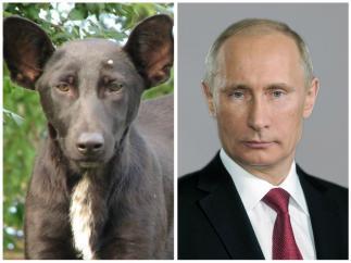 Путин полетел на саммит в Гамбург в обход Беларуси
