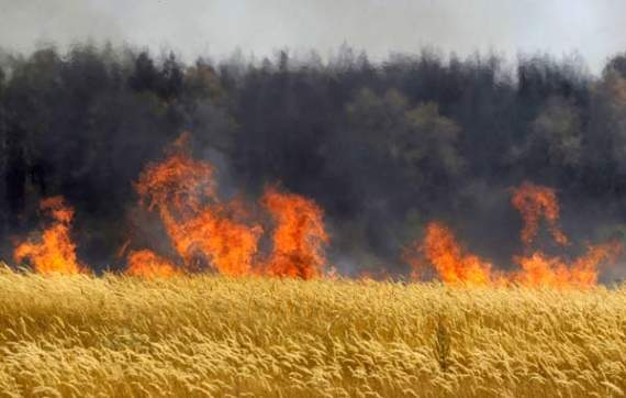 Хлебное перемирие. От обстрела боевиков сгорело 60 гектаров пшеницы.