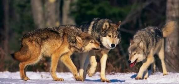 Бандеровские волки в Крыму )