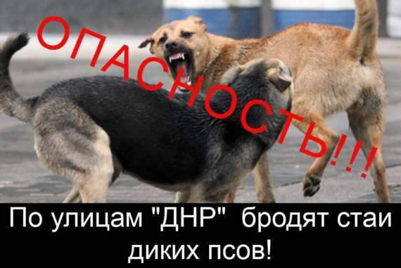 Бродячие псы – угроза обществу