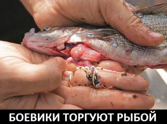 Боевики торгуют на базаре зараженной рыбой