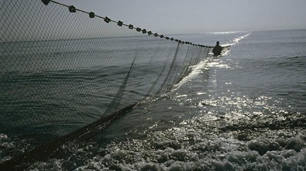 РФ захватила до 90% рыболовецких ресурсов Украины в Черном море
