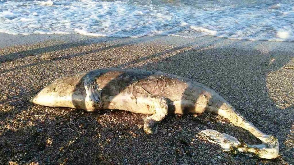 Дивне чудовисько викинуло на берег моря в Херсоні