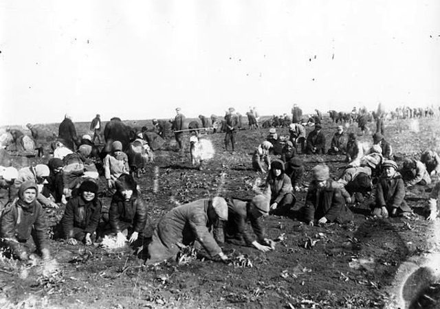 Как при Сталине платили колхозникам за труд