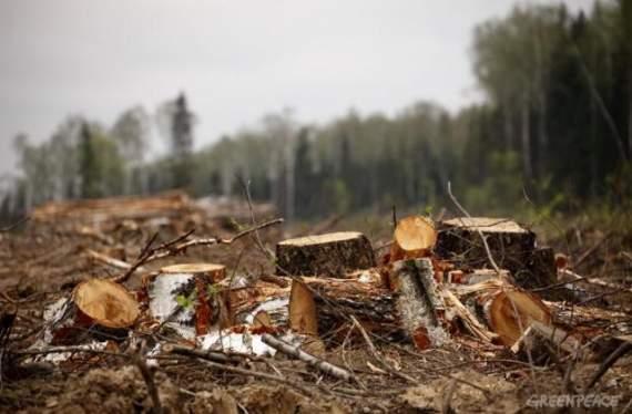 На оккупированном Донбассе взбунтовались люди из-за вырубки деревьев