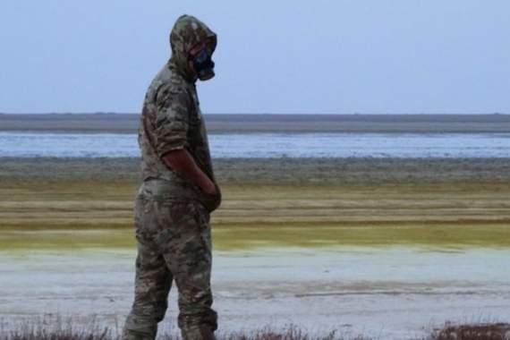 Животные умирают в муках: в оккупированном Крыму жалуются на ужасные последствия «химатаки»