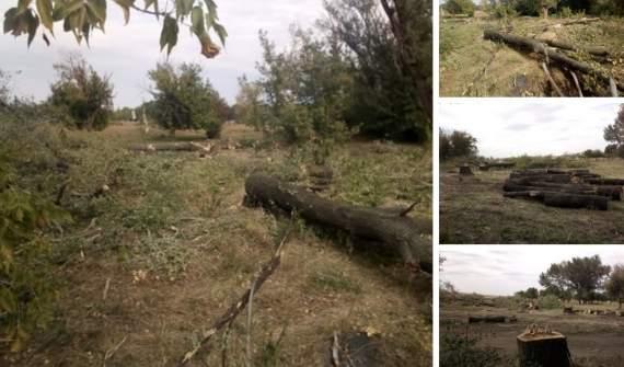 """Боевики """"ДНР"""" начали вырубку деревьев, местным разрешили собирать хворост"""