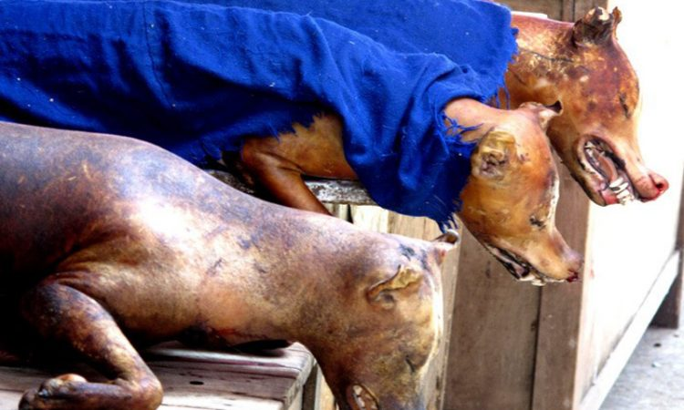На Московии под видом баранины продавали мясо собаки
