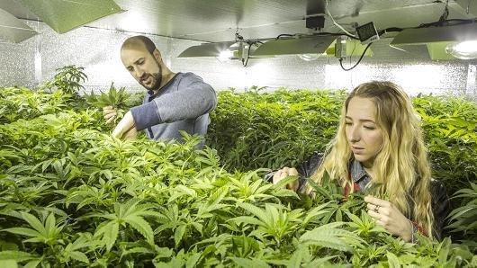 """""""Все йде за планом"""": ще одна європейська країна легалізувала марихуану"""